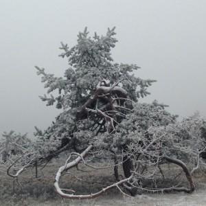 winterlandschaft_kahler_asten