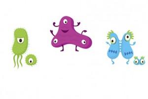 bakterien_kinder1