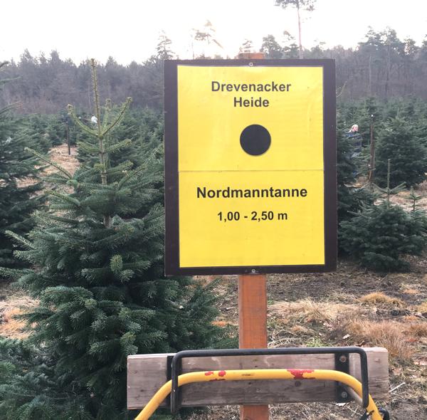 Tannenbaum Selber Schlagen.Kinderspass Weihnachtsbaum Selber Schlagen