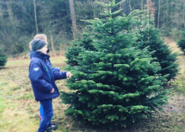 weihnachtsbaum_selber_schlagen1