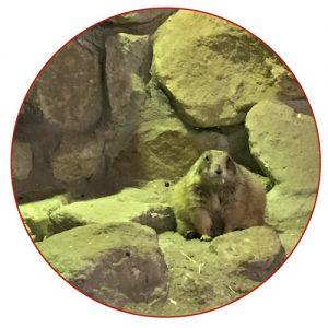 zoo_zajac_duisburg