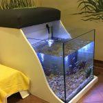 Fisch-Spa