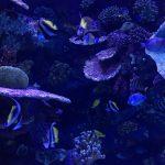 aquarium_antalya