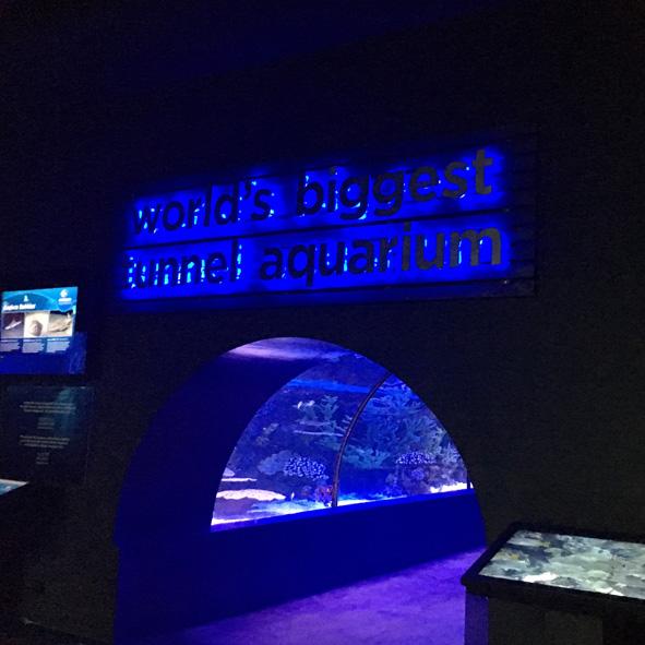 aquarium_antalya4