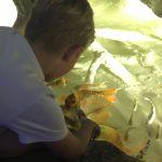 aquarium_antalya5