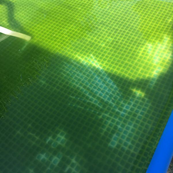 algen_pool_retten