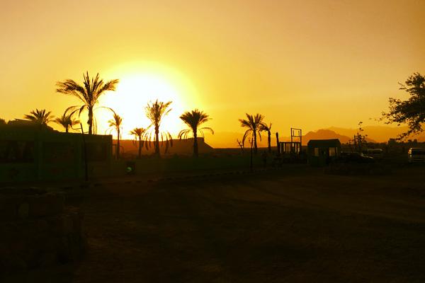sonnenuntergang_wueste_palmen_aegypten