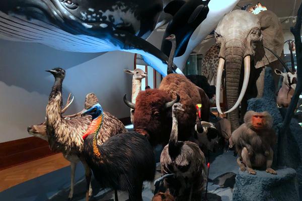 Naturkundemuseum Magdeburg Ausflugstipp Kinder