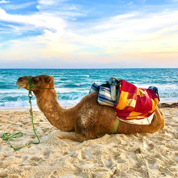 kamel_strand_reiten_tunesien