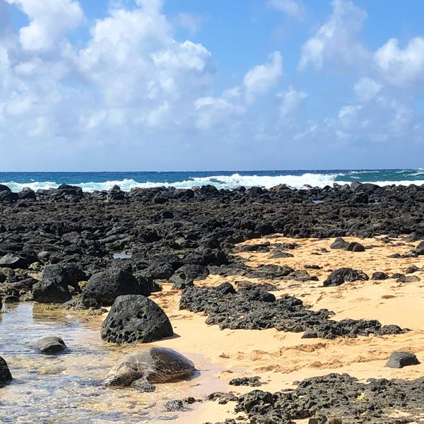 meeresschildkroete_strand