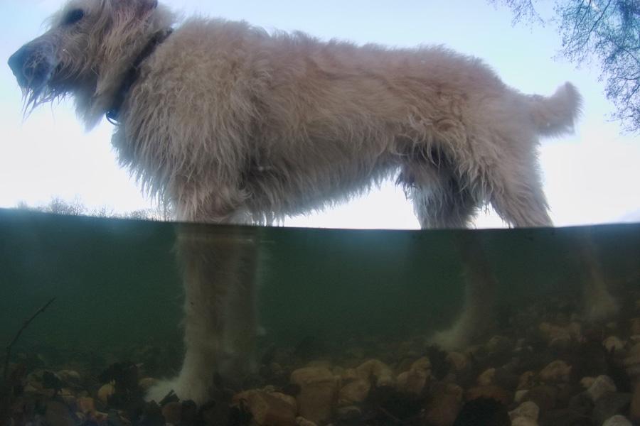 halb-ueber-halb-unterwasser-foto