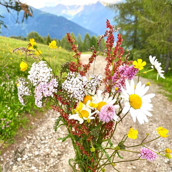 wildblumen_familienurlaub_oesterreich_dolomiten